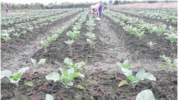 Traditional lifestyle, farming practices help conserve bio-diversity