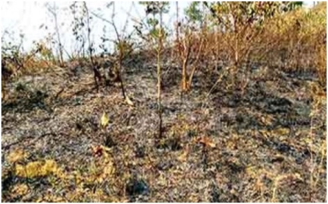 Kheba hill forest burnt to ashes