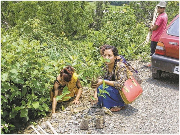 World Environment Day observed in Senapati